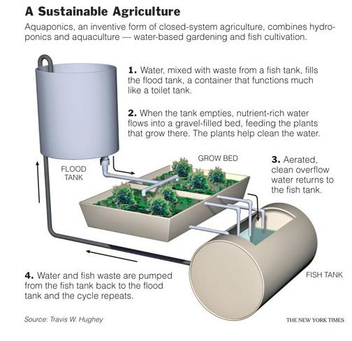 Travis Hughey's Barrel design for an aquaponics system